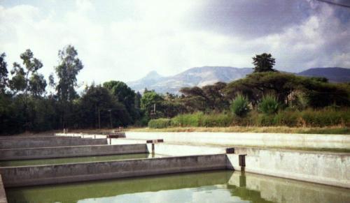 В связи с приездом руководителей ИПЭЭ РАН  Ю.Ю.Дгебуадзэ и Н.Н.Прищепо мы всей биологической компанией в выходные посетили рыбоводческое хозяйство Сабата, где работали наши ихтиологи,  и геотермальный курорт Содэрэ в 120 км от Аддис Абебы .